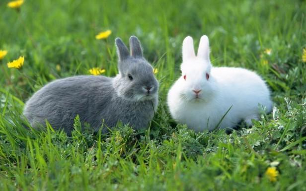 狼病了 松鼠送礼 小动物 兔子 04pg