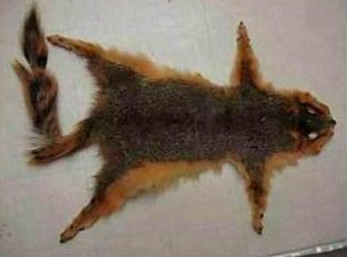 狼病了 松鼠送礼 小动物 兔子 08.jpg